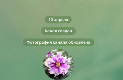 создан канал телеграм